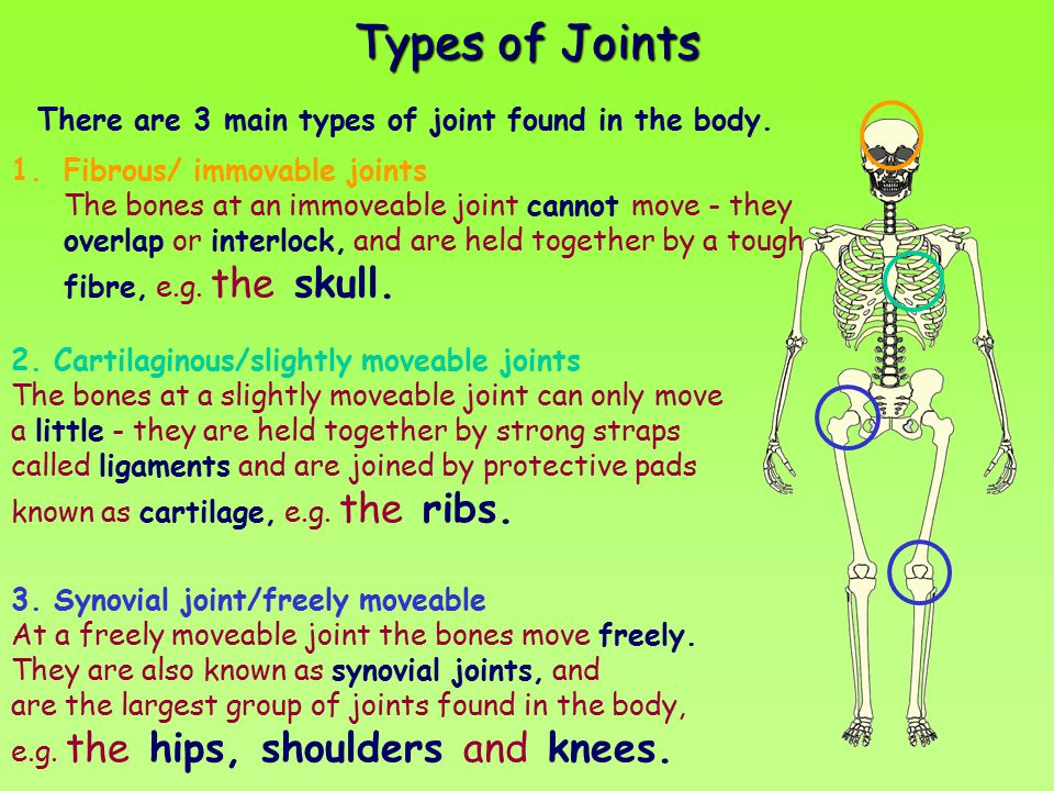 Types of Joints There are 3 main types of joint found in the body.