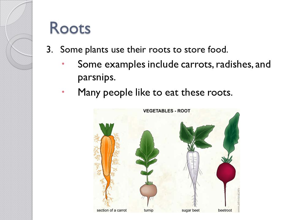 Roots Some examples include carrots, radishes, and parsnips.