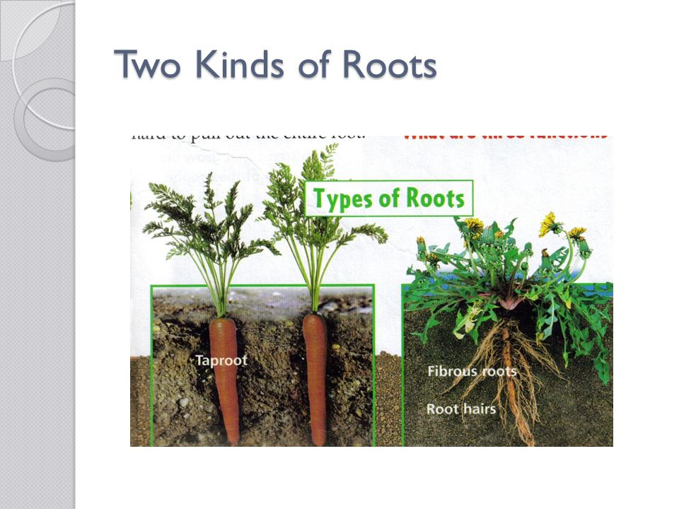 Two Kinds of Roots
