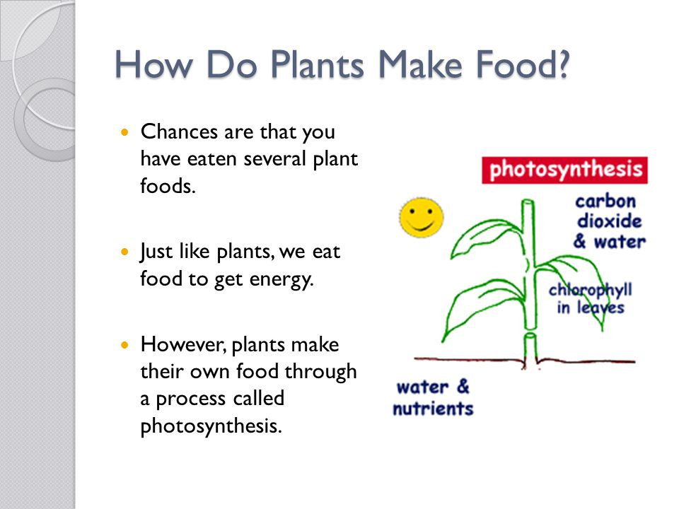 How Do Plants Make Food Chances are that you have eaten several plant foods. Just like plants, we eat food to get energy.