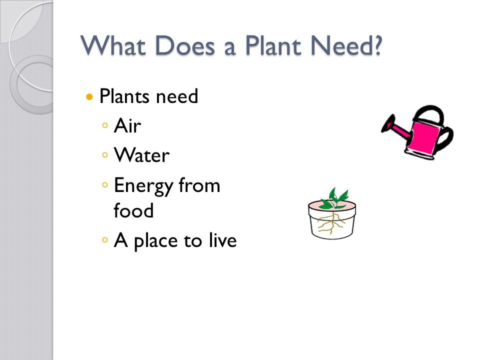 What Does a Plant Need Plants need Air Water Energy from food