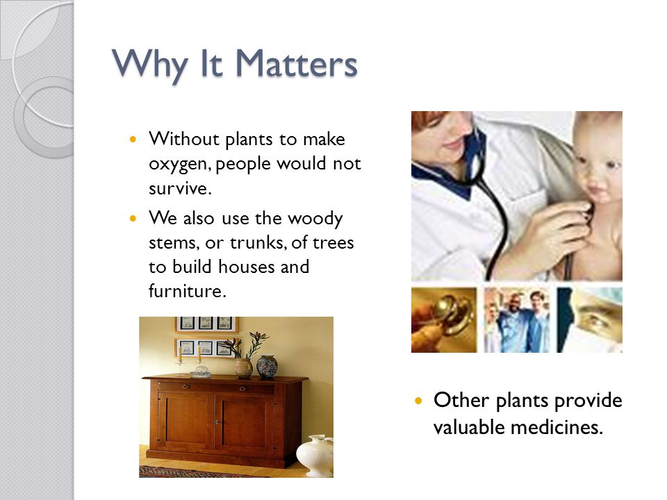 Why It Matters Other plants provide valuable medicines.