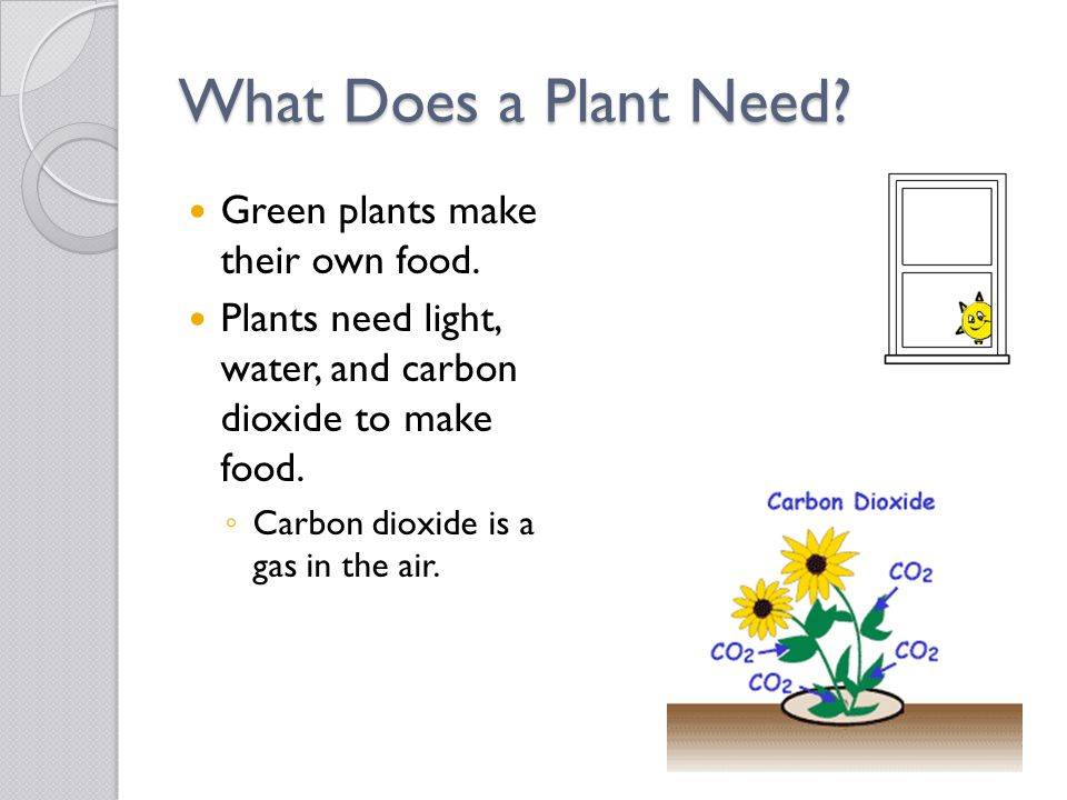 What Does a Plant Need Green plants make their own food.