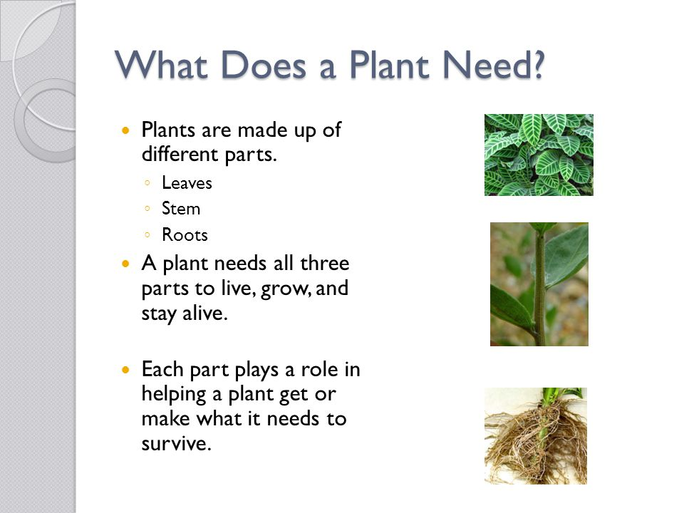 What Does a Plant Need Plants are made up of different parts.