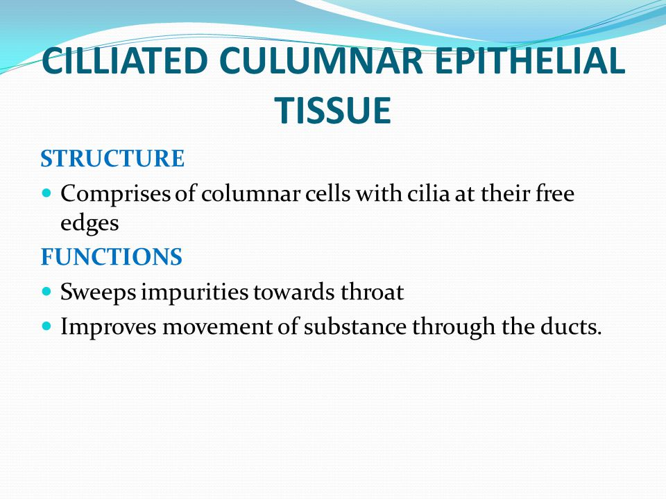 CILLIATED CULUMNAR EPITHELIAL TISSUE