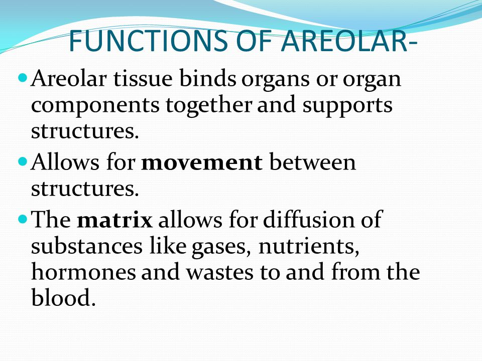 FUNCTIONS OF AREOLAR- Areolar tissue binds organs or organ components together and supports structures.