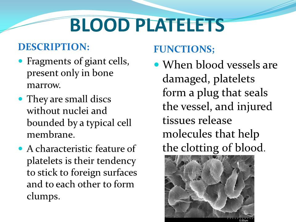 BLOOD PLATELETS DESCRIPTION: Fragments of giant cells, present only in bone marrow.