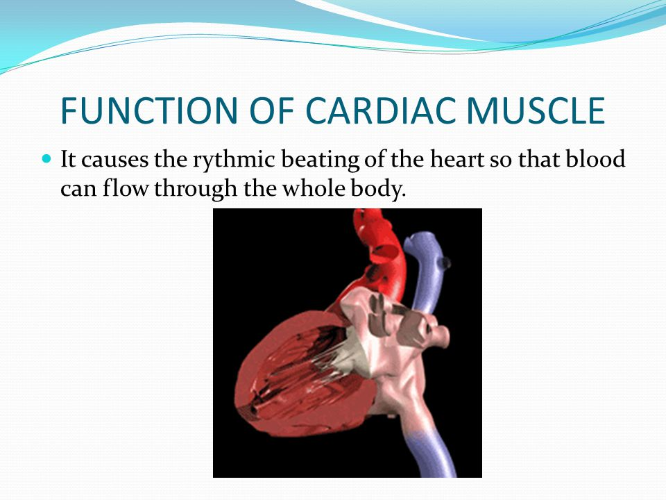 FUNCTION OF CARDIAC MUSCLE