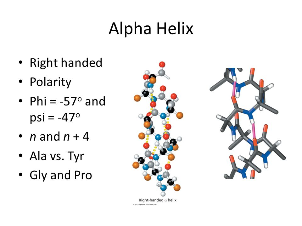 Alpha Helix Right handed Polarity Phi = -57o and psi = -47o