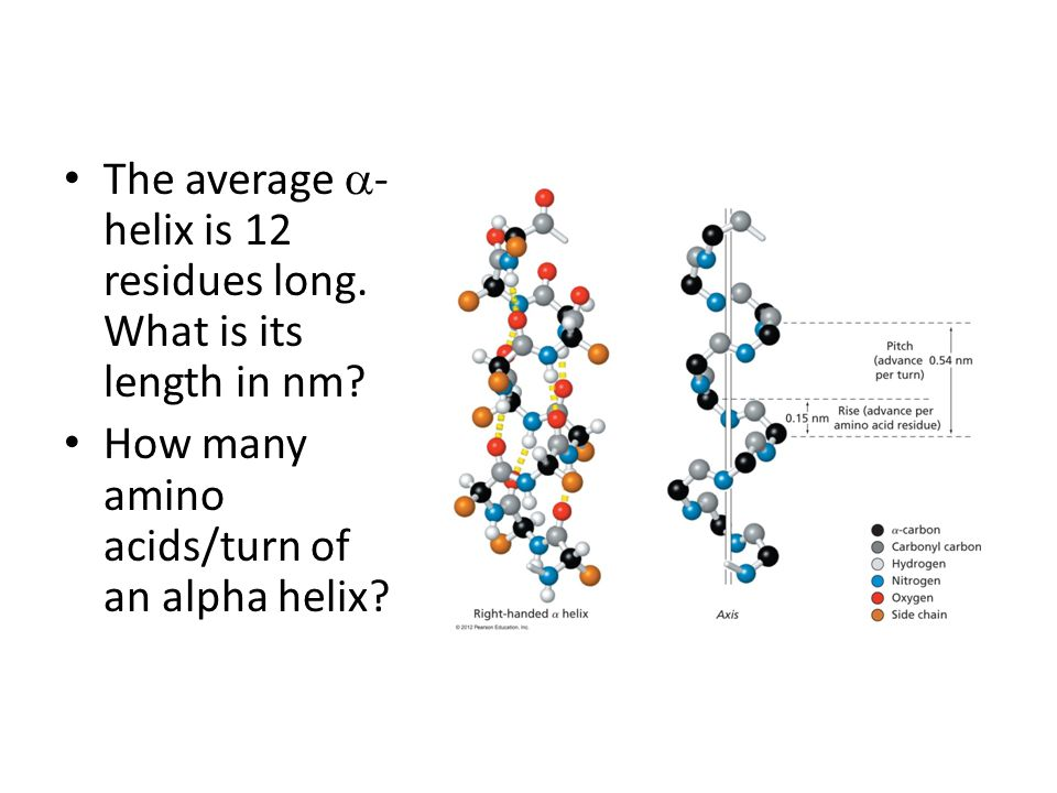 The average a-helix is 12 residues long. What is its length in nm
