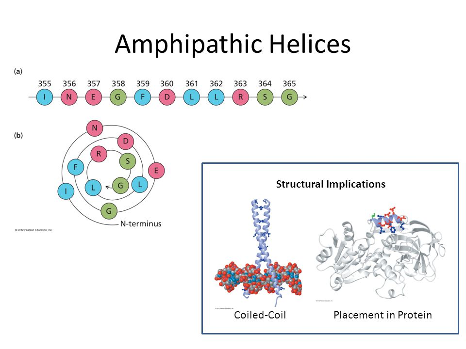 Amphipathic Helices Structural Implications Coiled-Coil