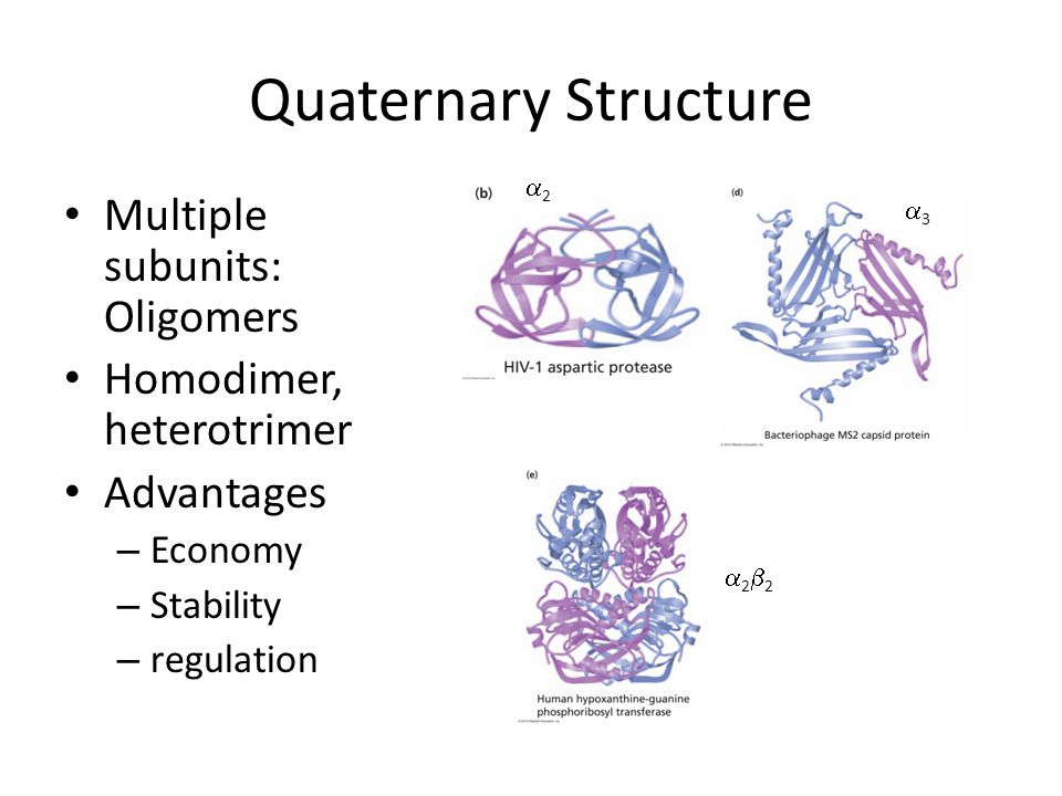 Quaternary Structure Multiple subunits: Oligomers