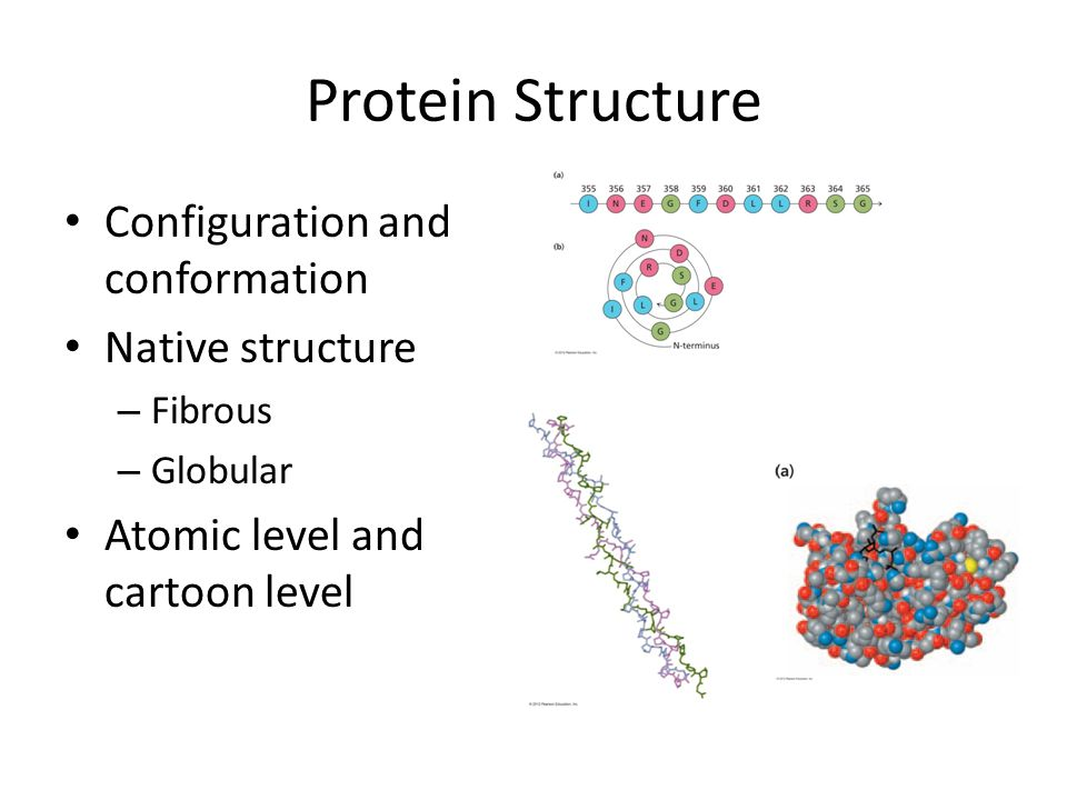 Protein Structure Configuration and conformation Native structure