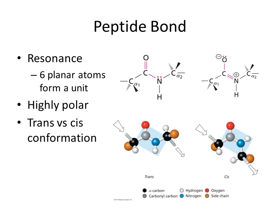 Peptide Bond Resonance Highly polar Trans vs cis conformation