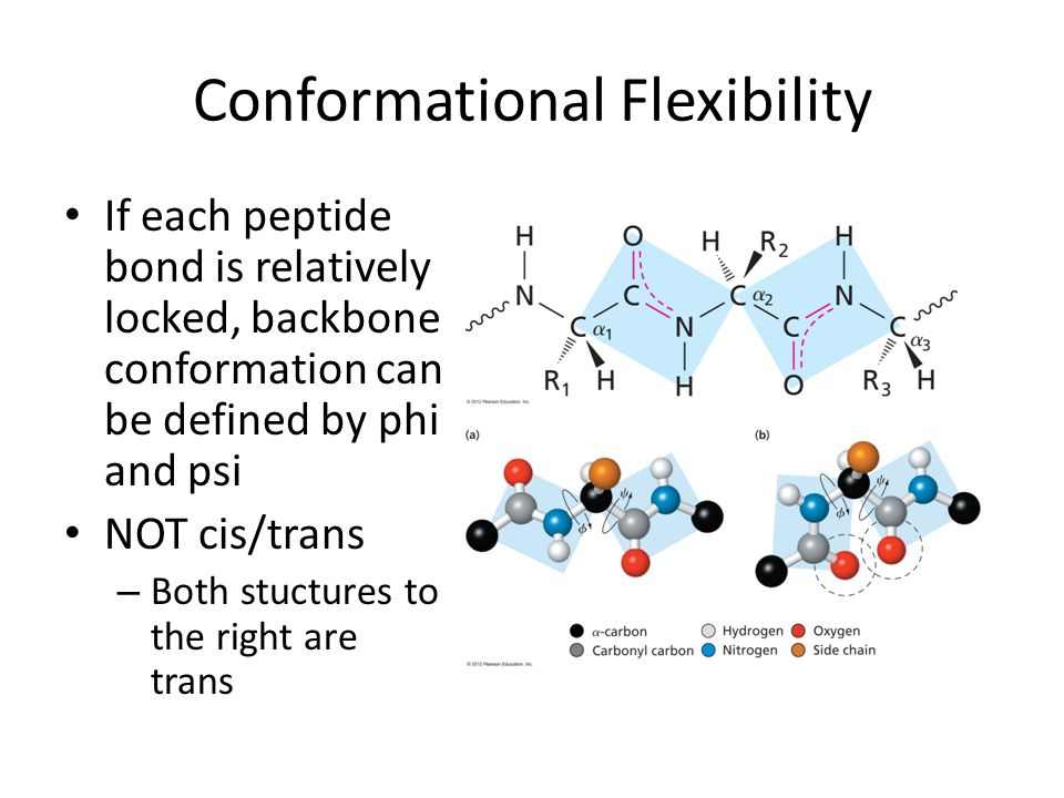 Conformational Flexibility