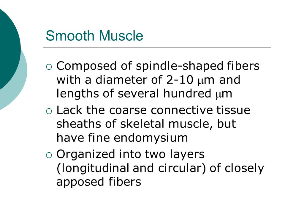 Smooth Muscle Composed of spindle-shaped fibers with a diameter of 2-10 m and lengths of several hundred m.