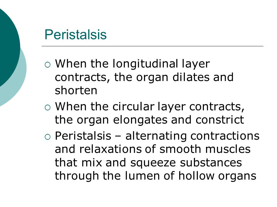 Peristalsis When the longitudinal layer contracts, the organ dilates and shorten.