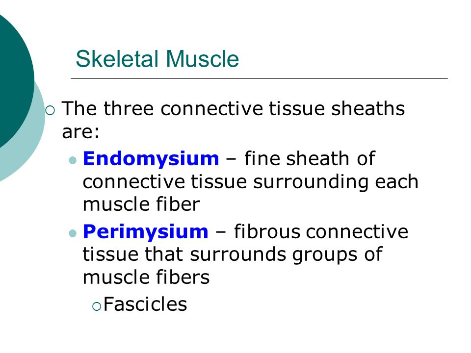 Skeletal Muscle The three connective tissue sheaths are: