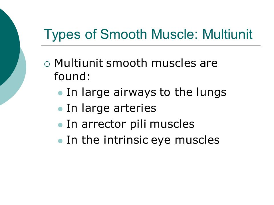 Types of Smooth Muscle: Multiunit