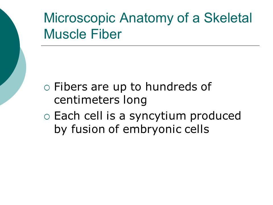 Muscles and Muscle Tissue - ppt download