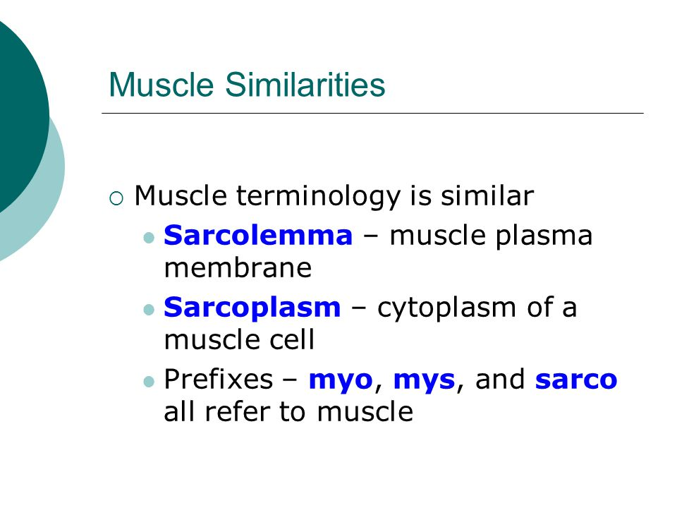 Muscle Similarities Muscle terminology is similar