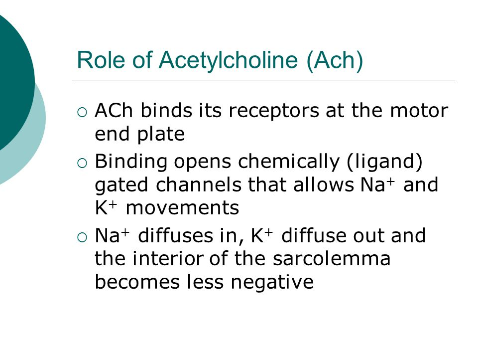 Role of Acetylcholine (Ach)