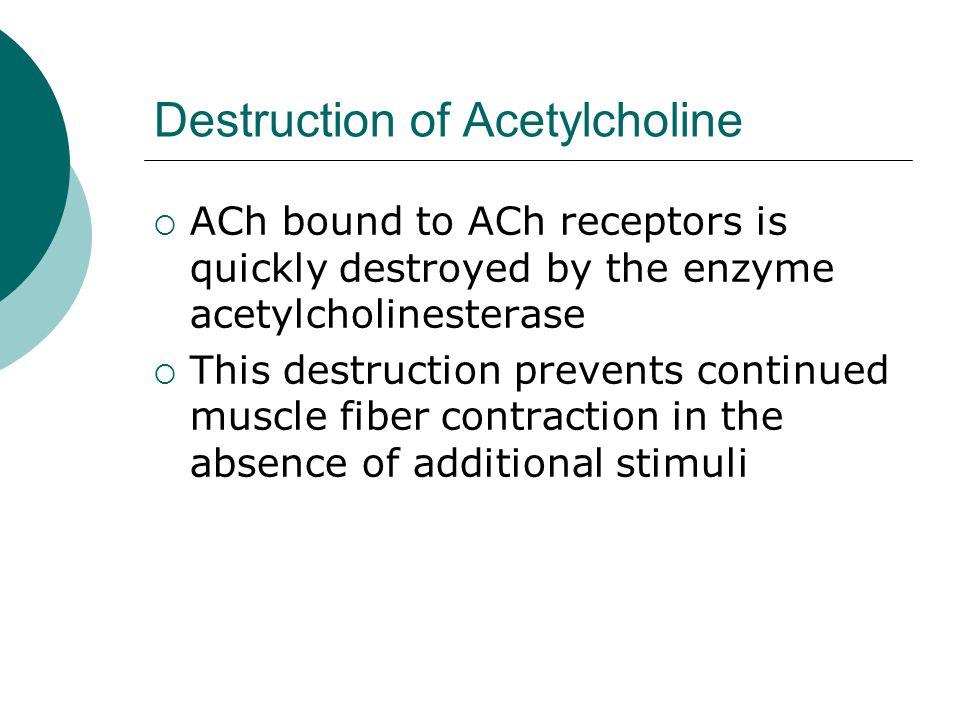 Destruction of Acetylcholine