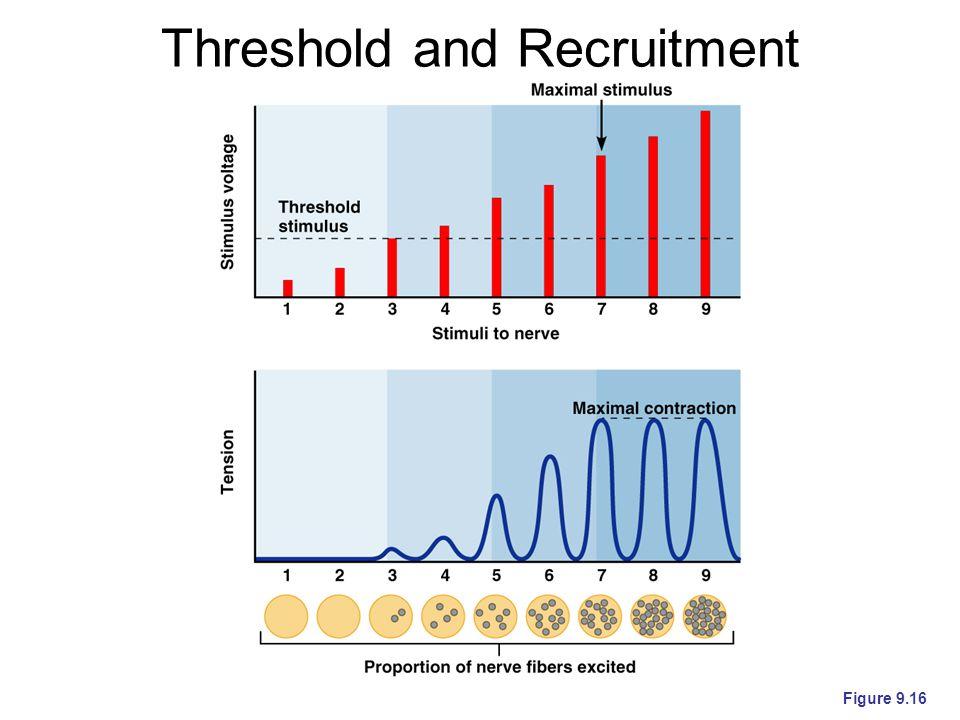 Threshold and Recruitment