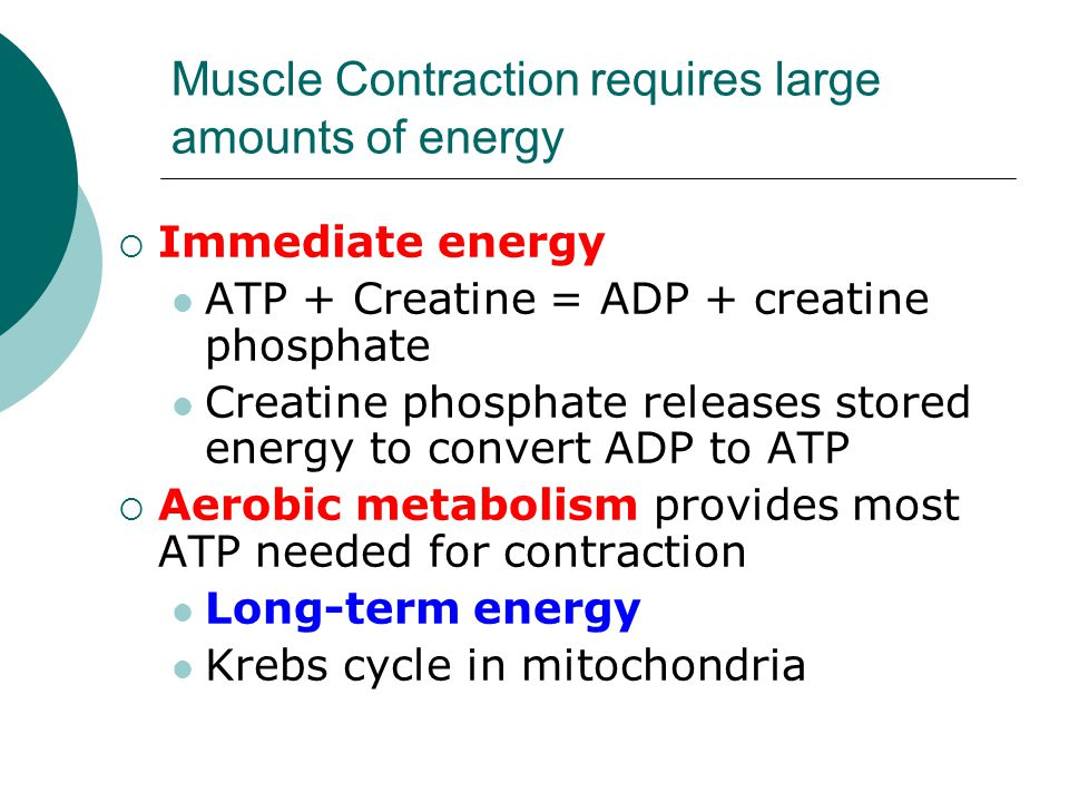 Muscle Contraction requires large amounts of energy