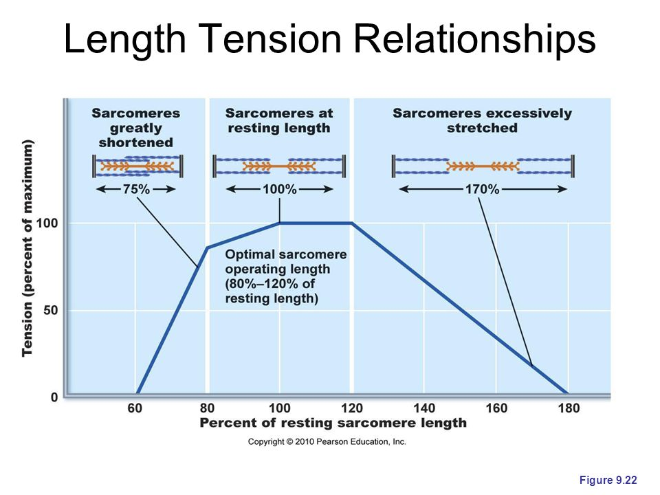 Length Tension Relationships