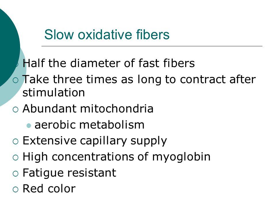 Slow oxidative fibers Half the diameter of fast fibers