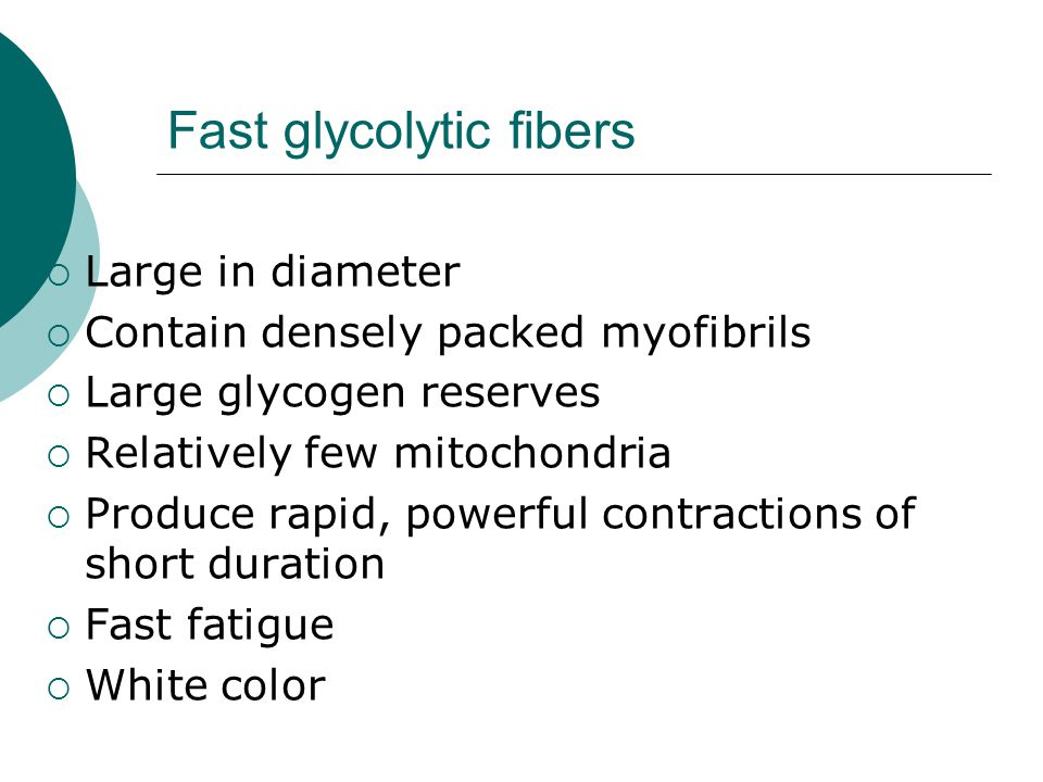 Fast glycolytic fibers
