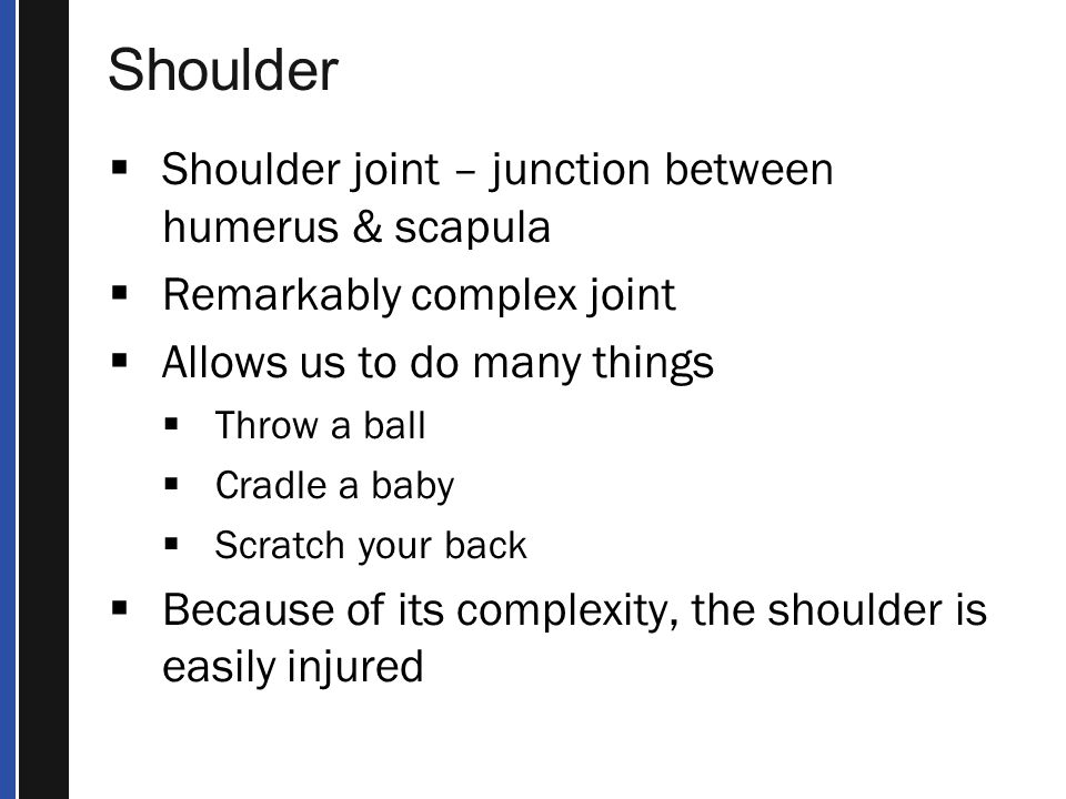 Shoulder Shoulder joint – junction between humerus & scapula