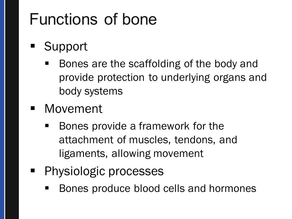 Functions of bone Support Movement Physiologic processes