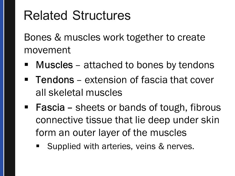 Related Structures Bones & muscles work together to create movement