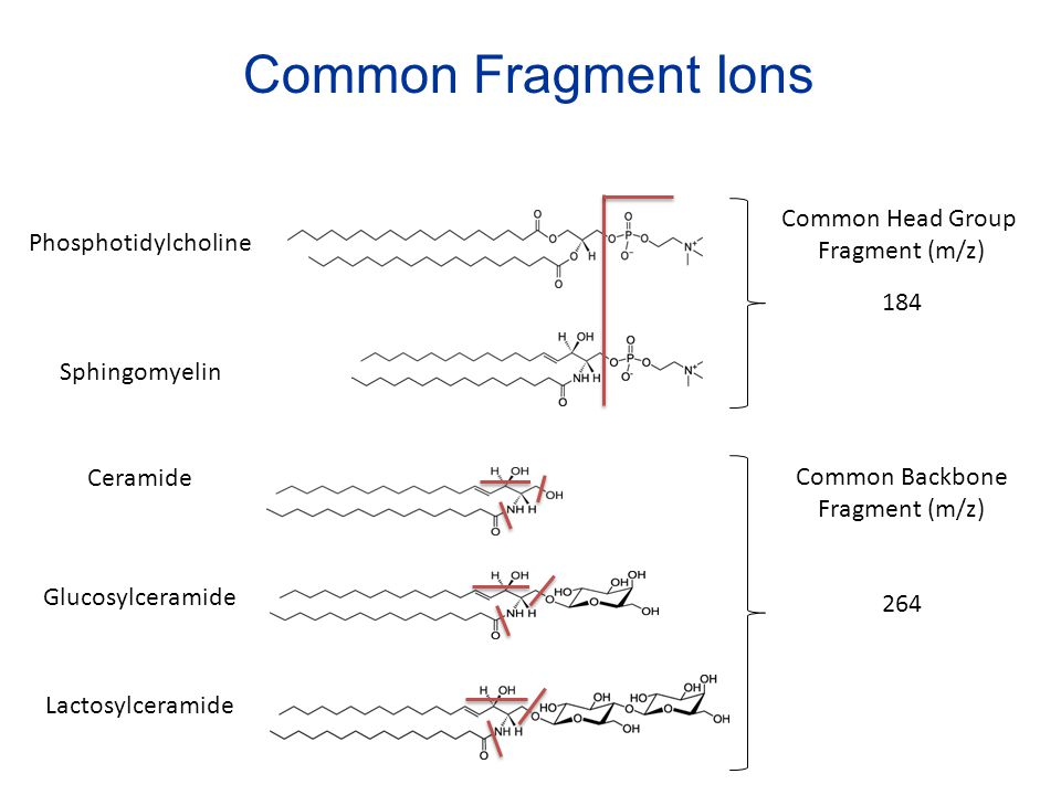 Common Fragment Ions Common Head Group Fragment (m/z)
