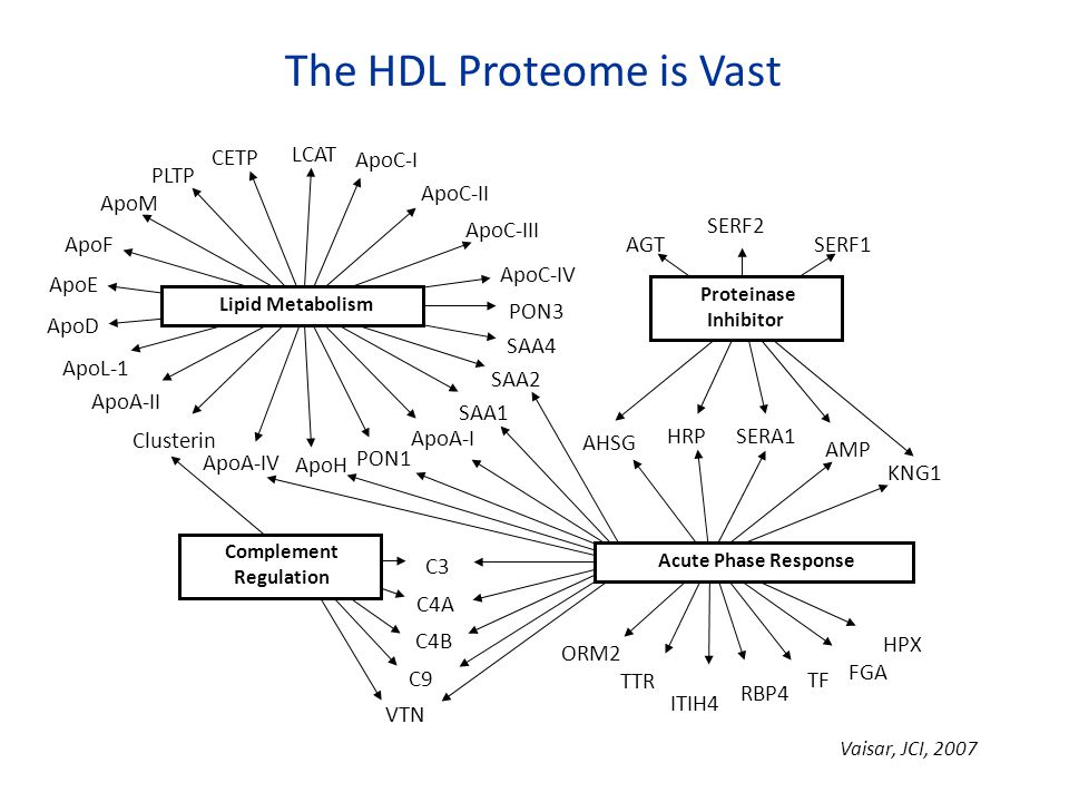 The HDL Proteome is Vast