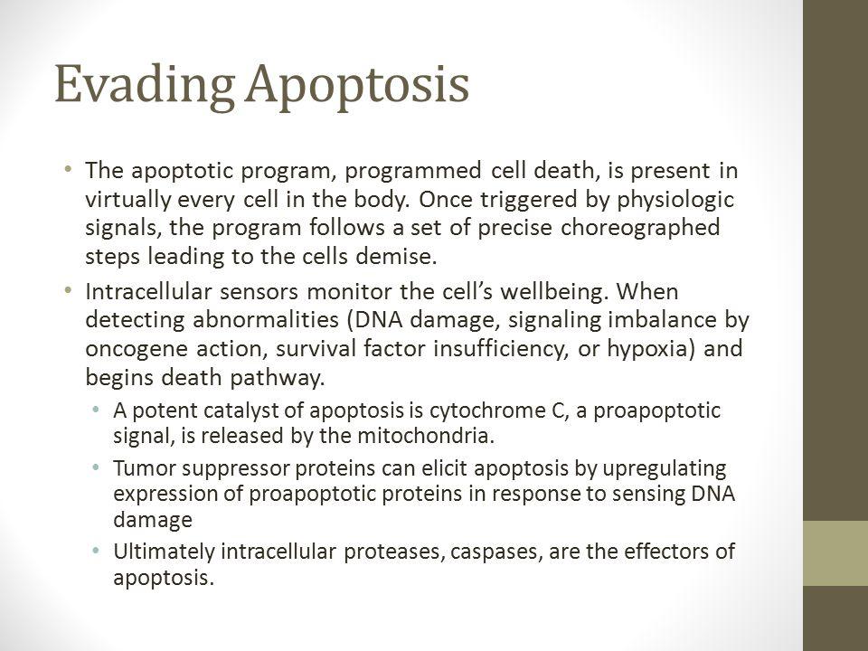 Evading Apoptosis