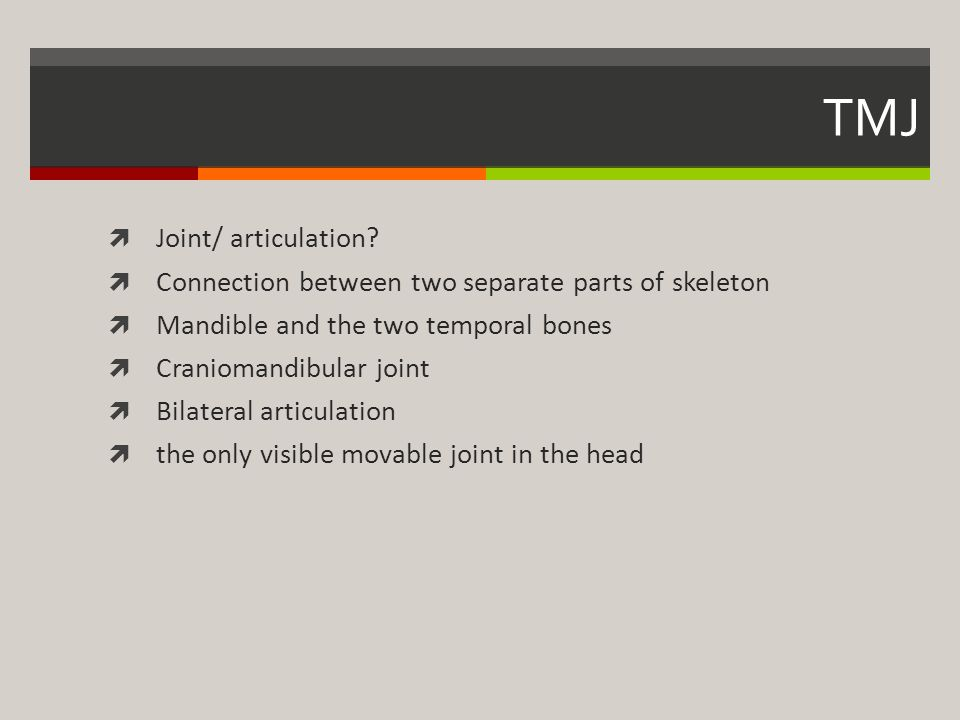 TMJ Joint/ articulation