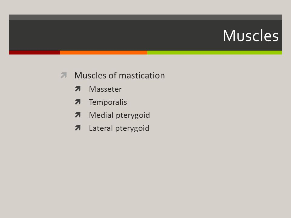 Muscles Muscles of mastication Masseter Temporalis Medial pterygoid