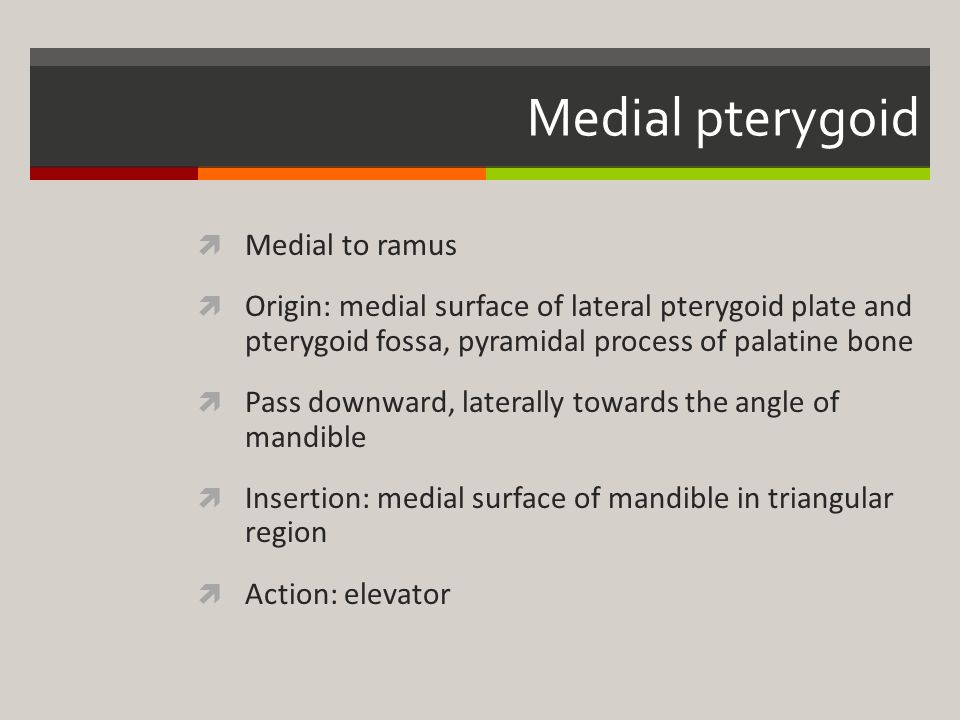Medial pterygoid Medial to ramus