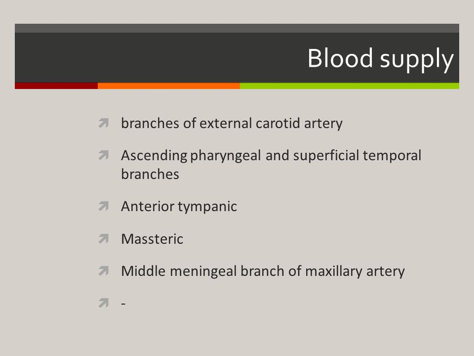 Blood supply branches of external carotid artery