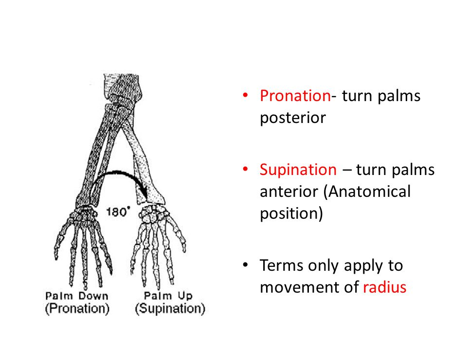Pronation- turn palms posterior