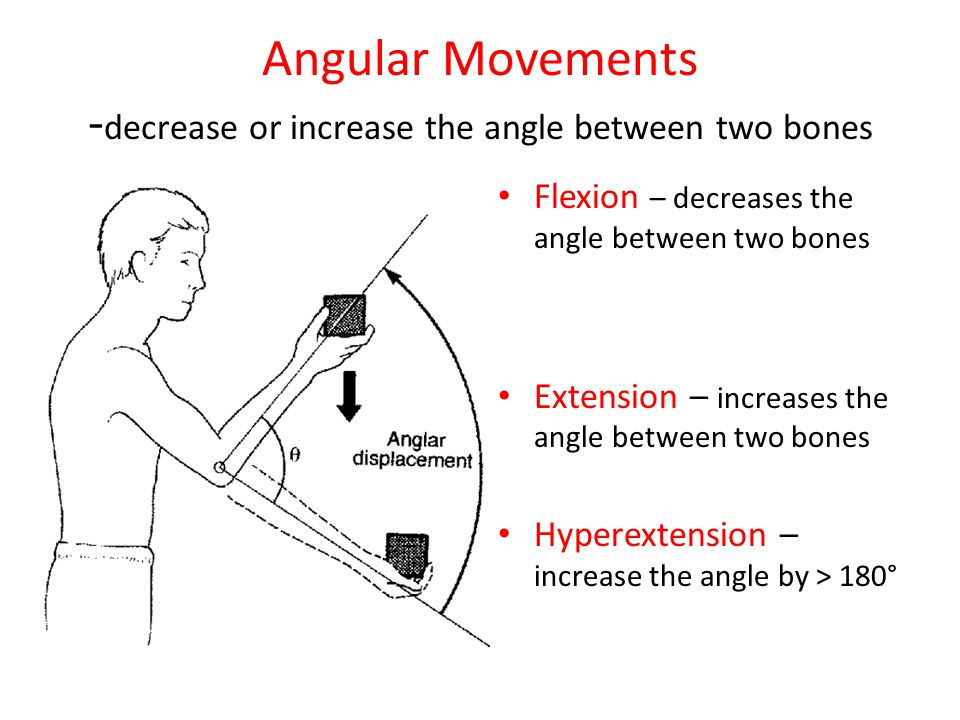 Angular Movements -decrease or increase the angle between two bones
