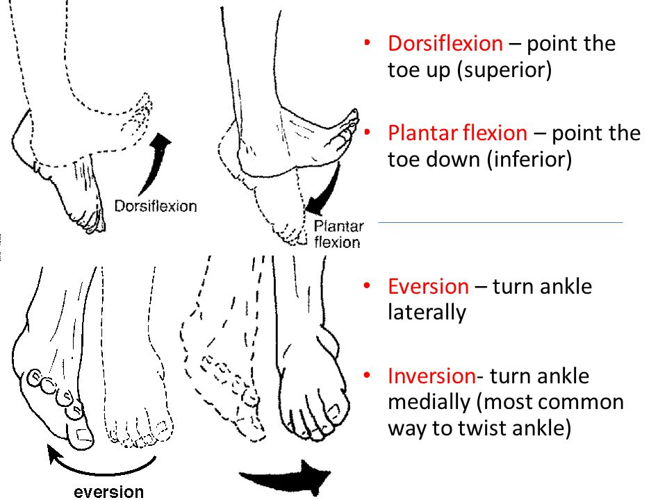 Dorsiflexion – point the toe up (superior)