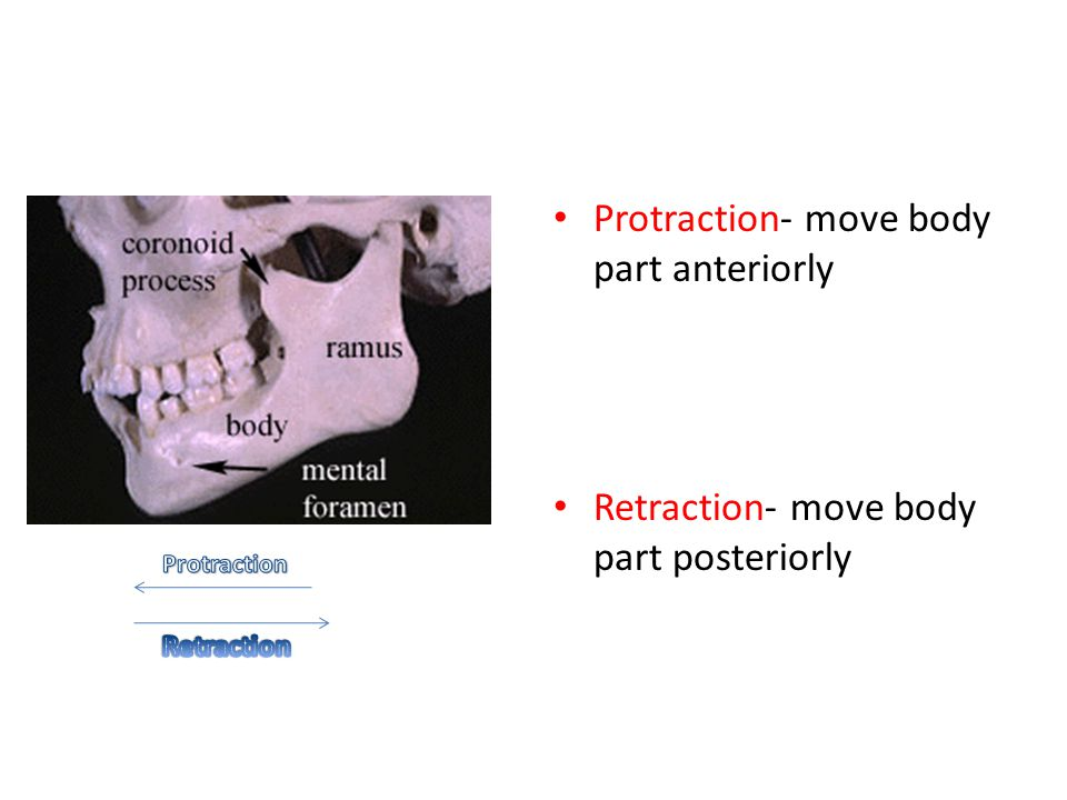 Protraction- move body part anteriorly