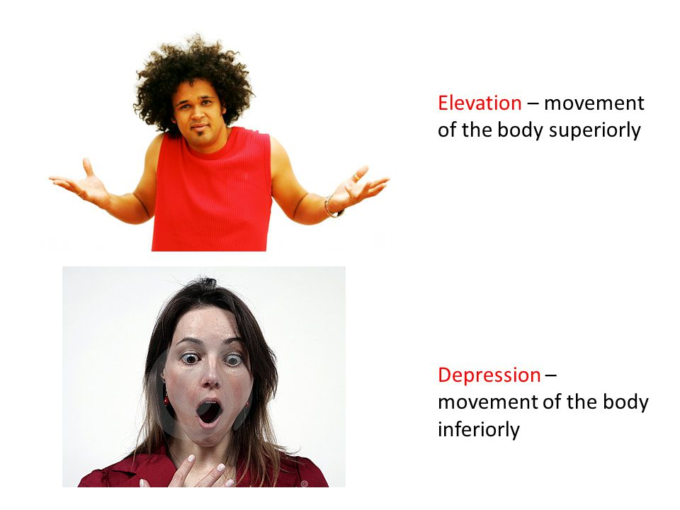 Elevation – movement of the body superiorly