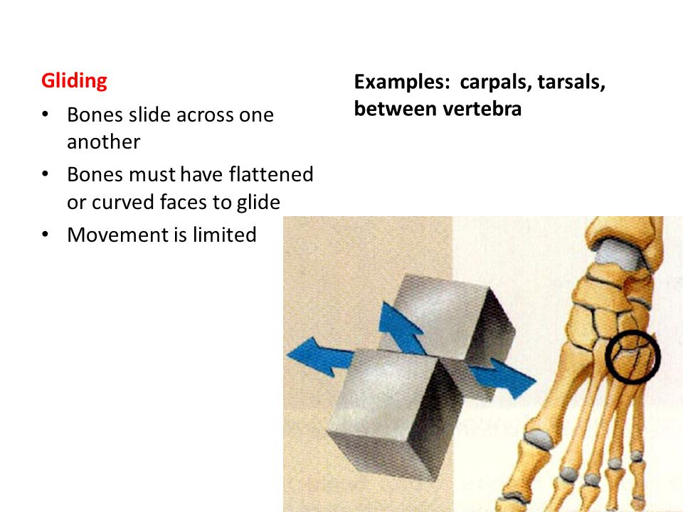 Examples: carpals, tarsals, between vertebra