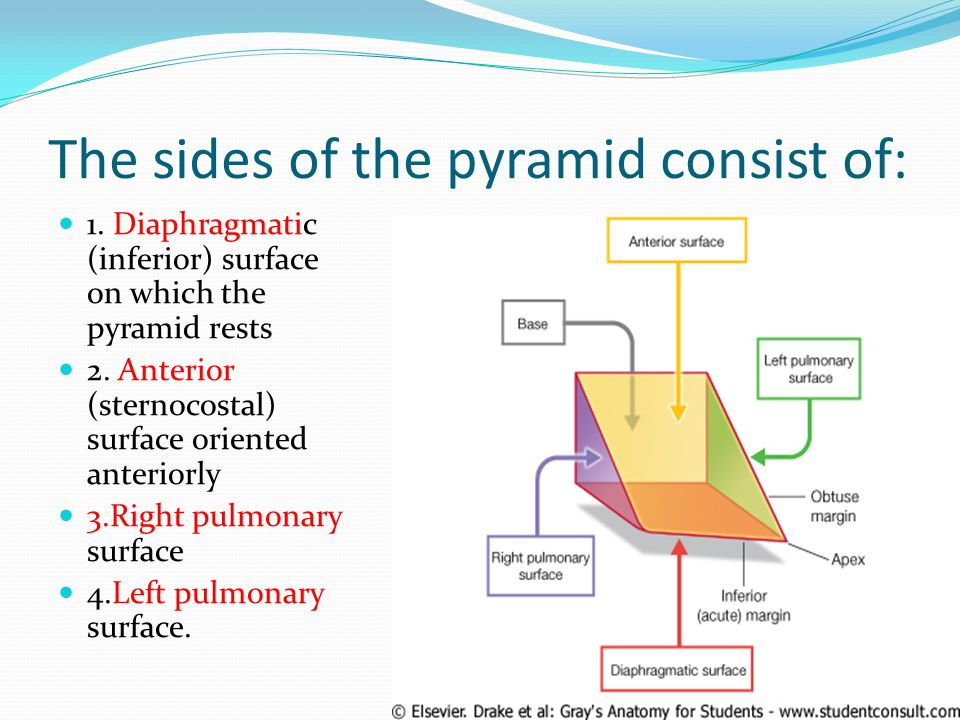 The sides of the pyramid consist of: