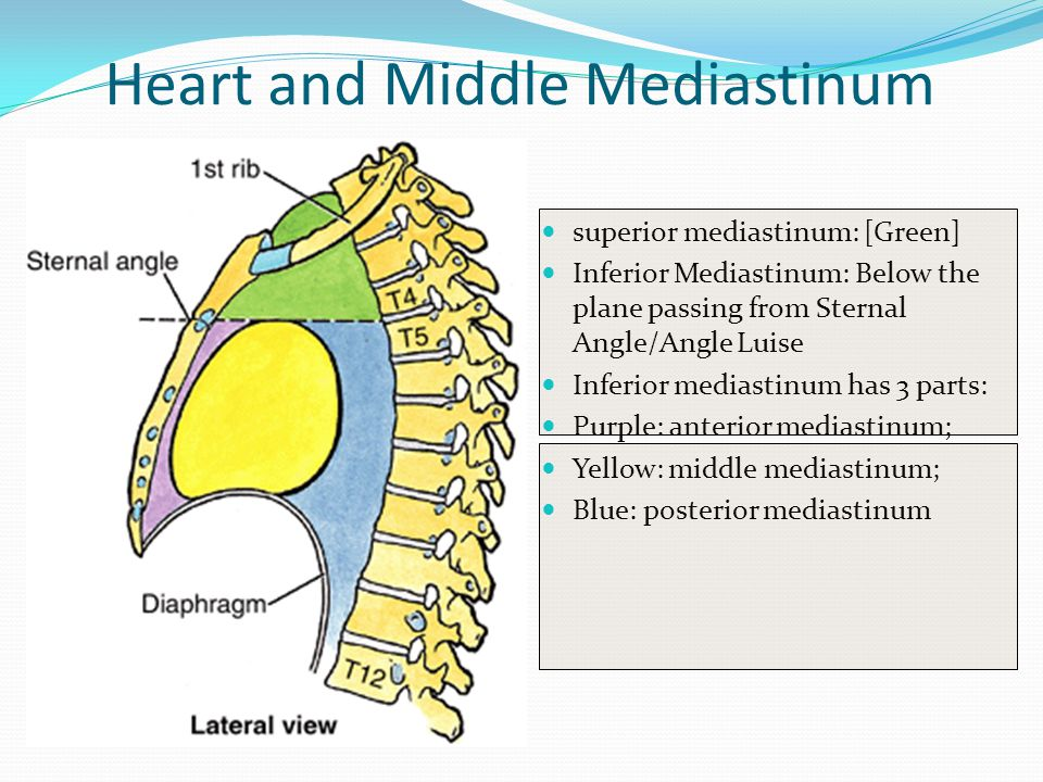 Heart and Middle Mediastinum